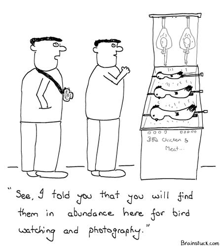 Bird Watching, Photography, Birding, Birdie, Bird Sanctuary, Nature & Wildlife Comic, Chicken Grill , Bar-Be-Que